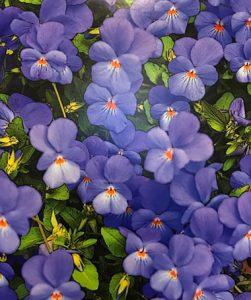 Steve Finkle – Garden Flowers